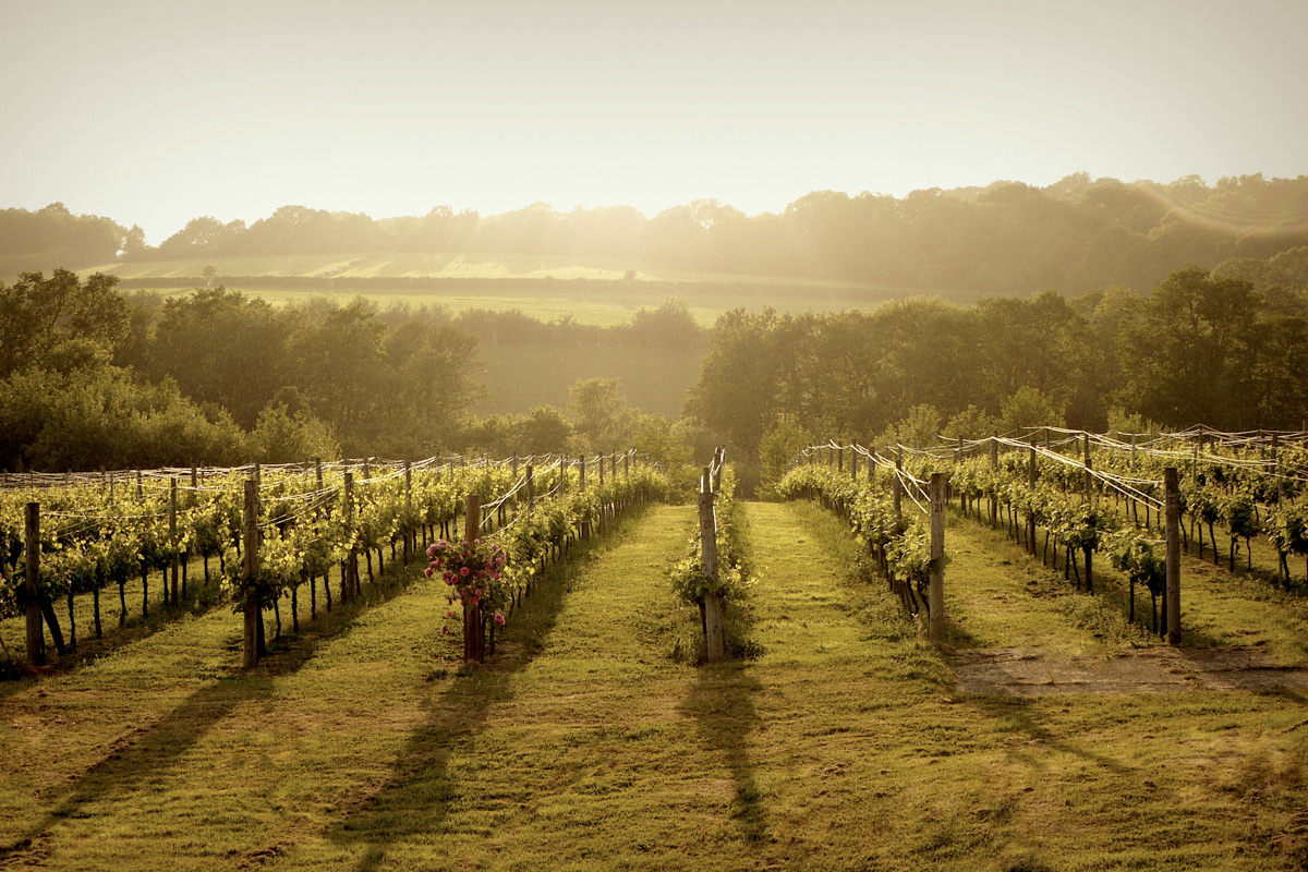 Bluebell Vineyard Estates Tour with Cheese and Wine Tasting for Two