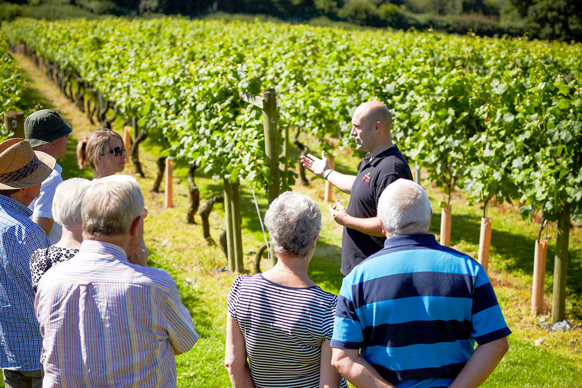 One Night Countryside Break with Vineyard Tour with Cheese and Wine Tasting at Chap