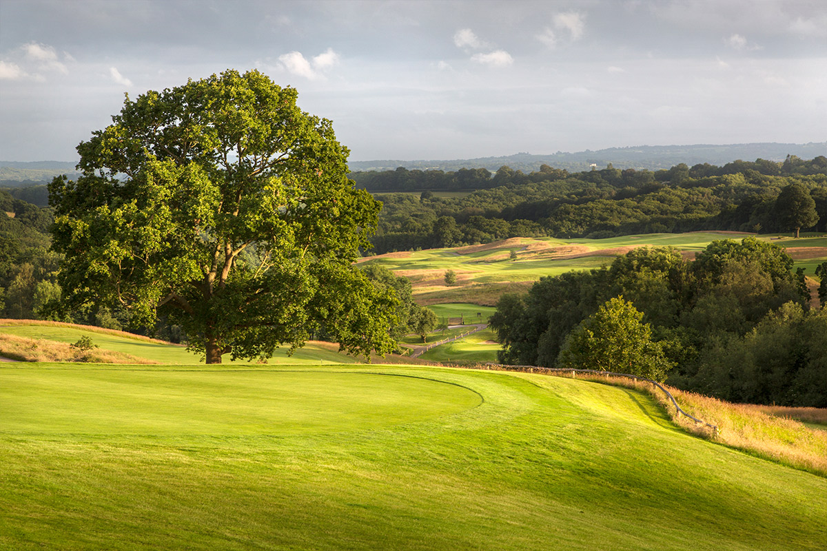Round of Golf on the Dale Hill Course for One