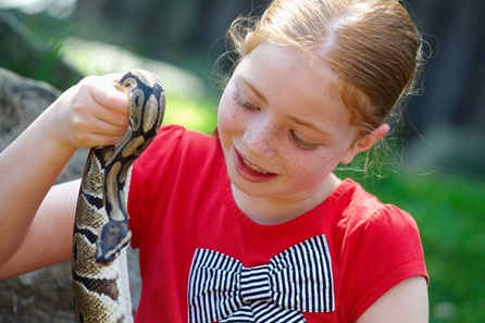 Snuggle up to a Snake at Drusillas Park