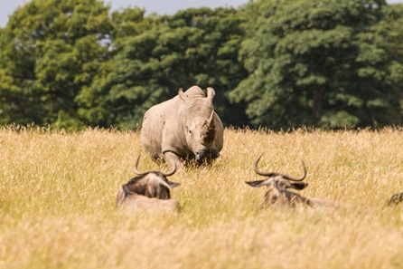Knowsley Safari Park Family Ticket