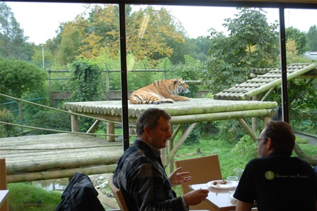 Afternoon Tea with the Tigers for Two