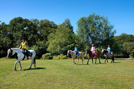 Introduction to Horse Riding in the New Forest