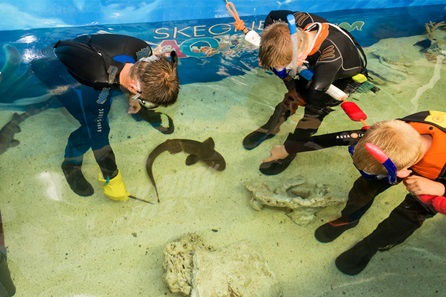 Junior Snorkel with Baby Sharks at Skegness Aquarium