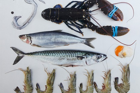 The Ultimate Fish and Shellfish Cookery Class at the Cookery School, Little Portland Street