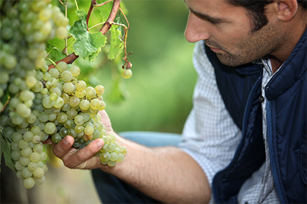 Vineyard tour, Tasting and lunch for two - Special offer