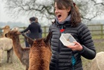 Alpaca Walking Experience for Two at Middle England Farm