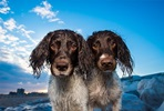 Bespoke Outdoor Photoshoot for Dogs