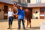 Thoroughbred Racehorse Training - Behind the Scenes Private VIP Experience