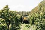 Vineyard Tour and Wine Tasting for One