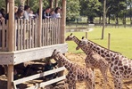 Visit to ZSL Whipsnade Zoo - Two Adults